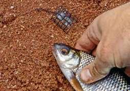 Чтобы привлечь рыбу, в течение первого часа придется изрядно потрудиться.