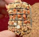 Гранулы пелетса зажимаю прикормкой в середине кормушки.
