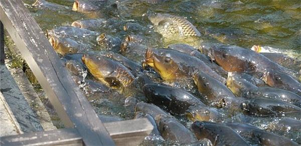 с какого наступает запрещение получай рыбную ловлю
