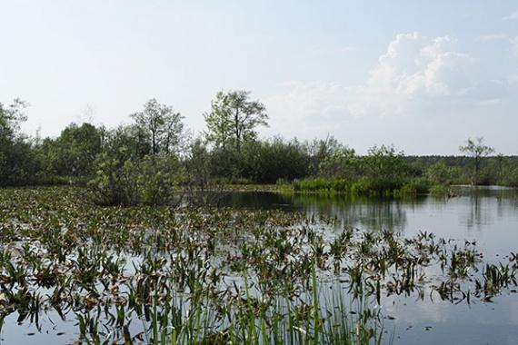 Озеро Палецкое