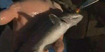 Рыбалка на озере Кукас