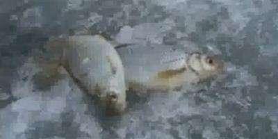 Рыбалка на Цимлянском водохранилище