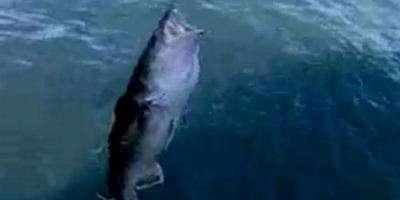 Ужение терпуга в море на Камчатке.