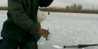 Ловля воблы зимой на Ахтубе.