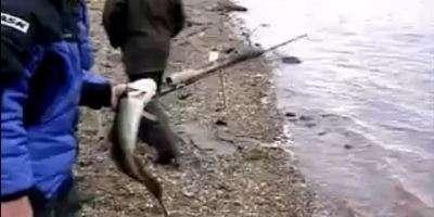 как ловят налима в сибири