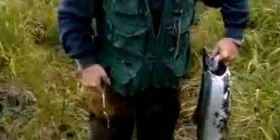 Ловля кижуча на Камчатке.