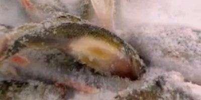 Рыбалка в Юрьино, Приветлужье.