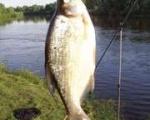 жж записки рыболова