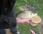 Голохвастово рыбалка